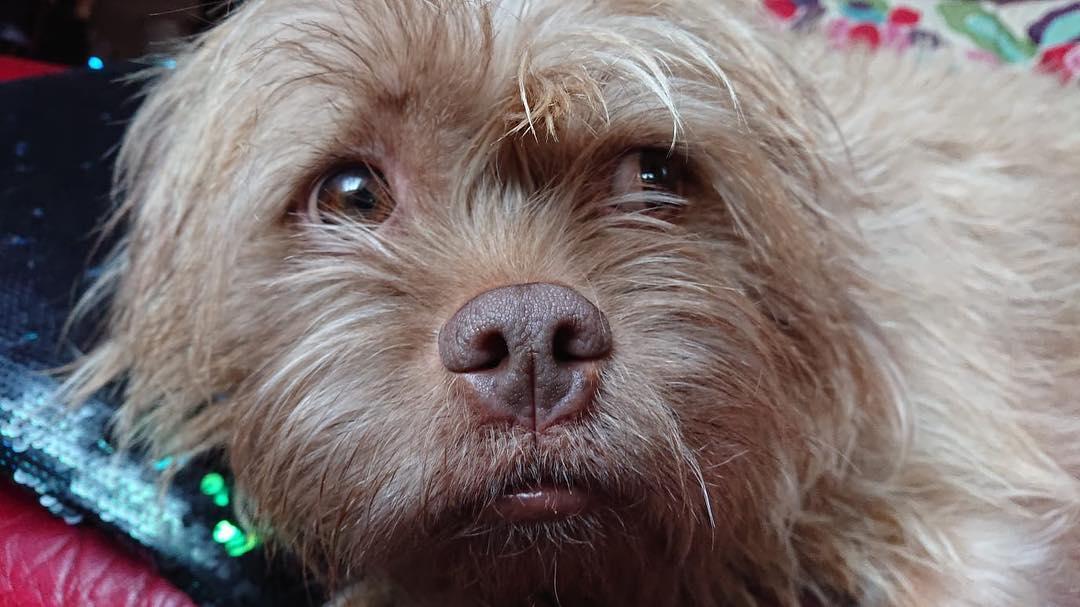 Perrito con raras expresiones