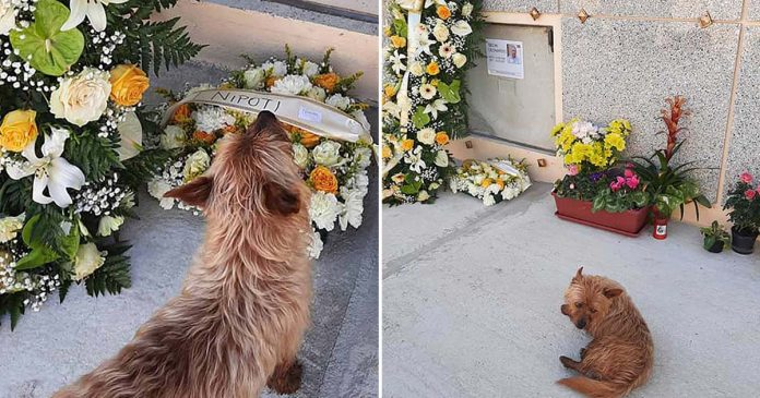 Perrito recorre kilómetros para visitar tumba