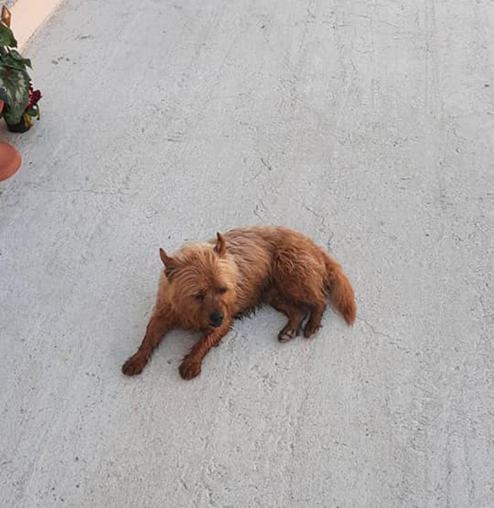 Perrito recorre kilómetros tumba