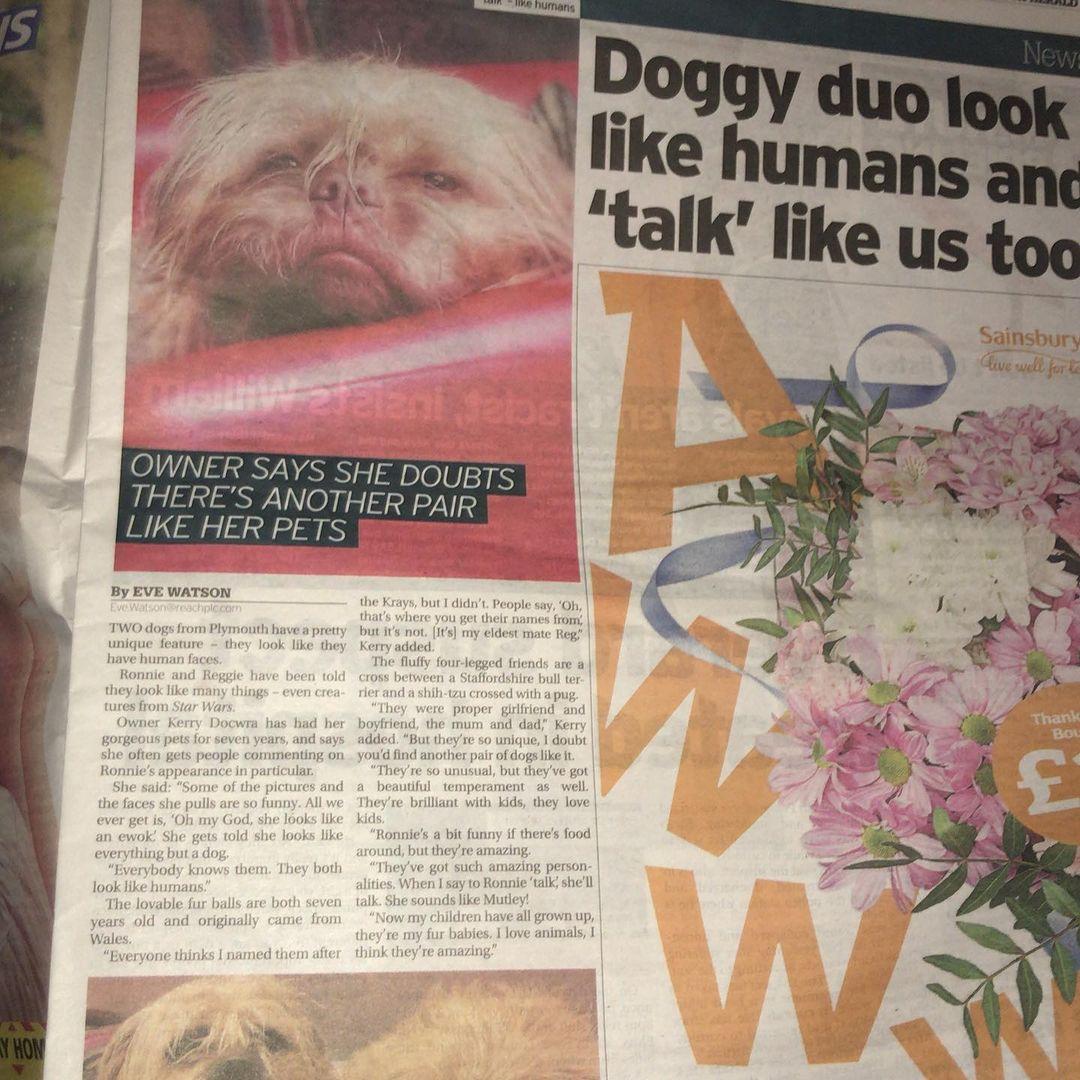 Perritos salen en el periódico local