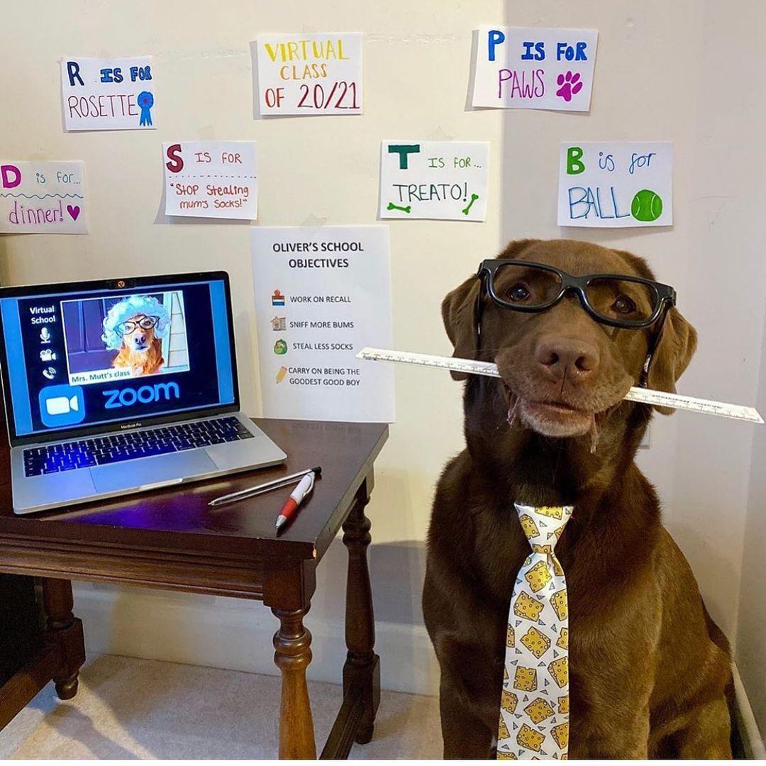 Adorable perro con lentes