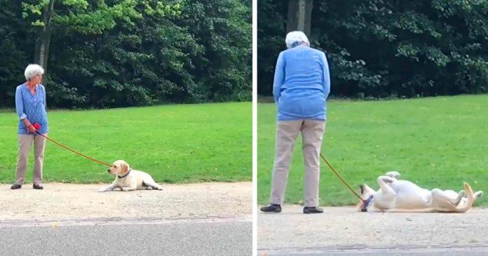 Adorable perro juega a hacerse el muerto para no tener que salir del parque