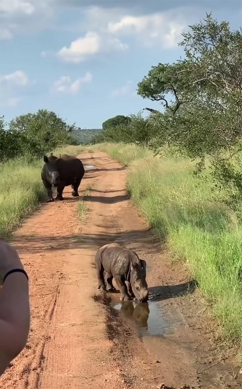 Adorable bebé rinoceronte y su madre