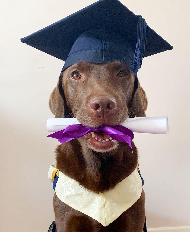 Familia le da a su perro fotos de graduación