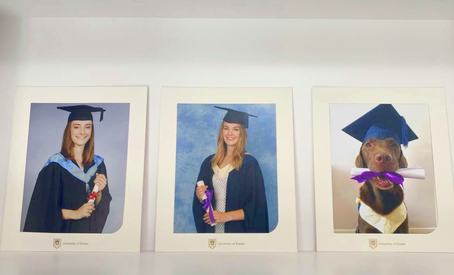Familia le da a su perro sus propias fotos de graduación