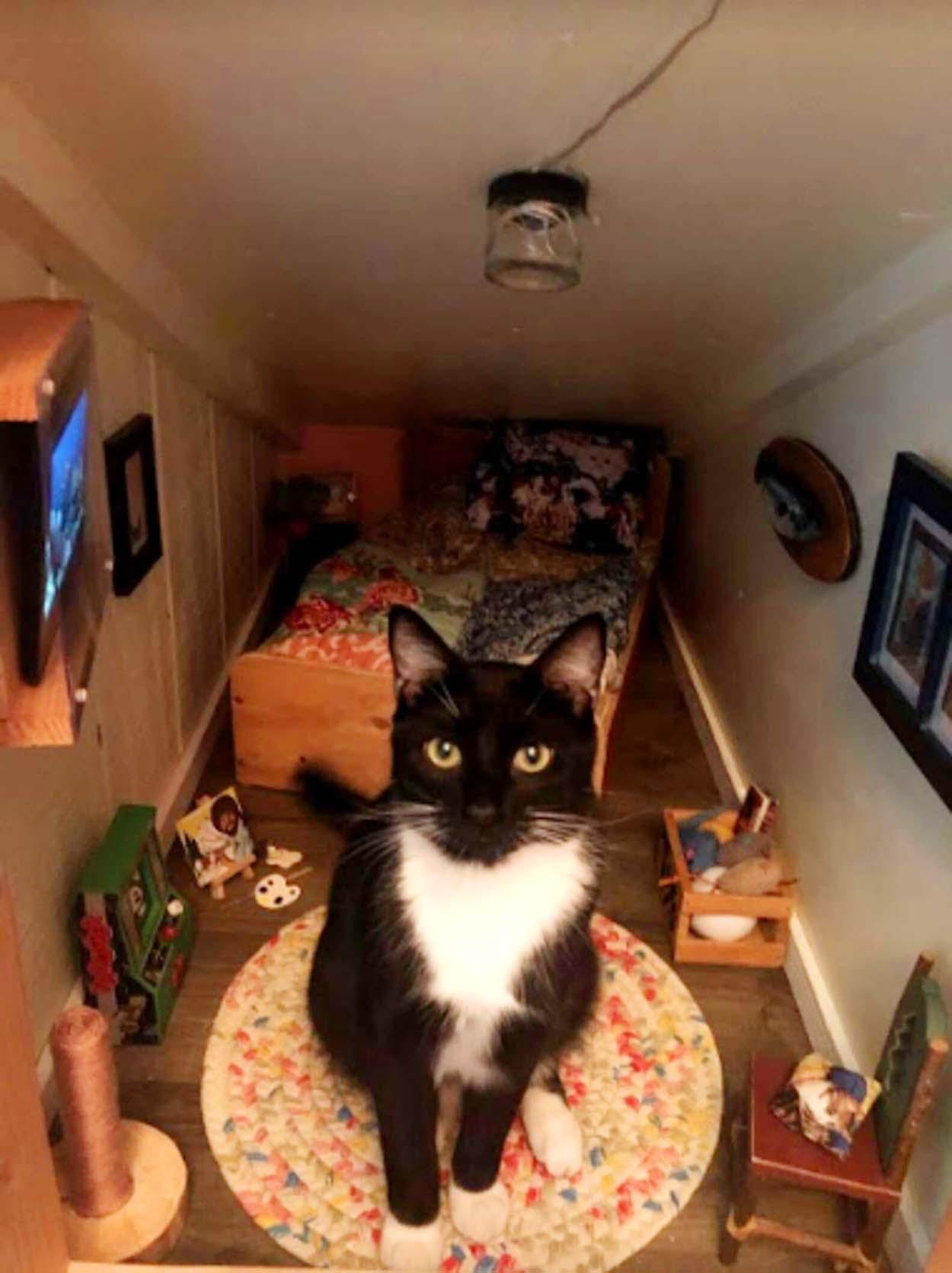 Gatito en su cuarto especial