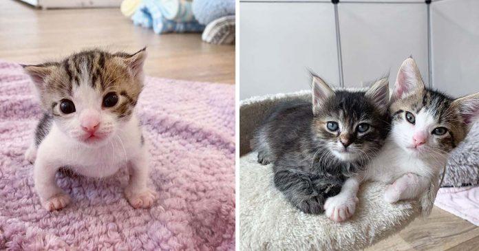 Gatito encontrado en el frío se convierte en un gato fuerte con un amigo