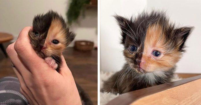 Gatito encontrado en una pared parece que fuera dos gatos diferentes