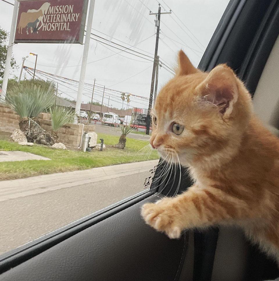 Gatito rumbo veterinario