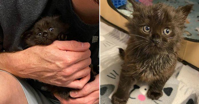 Gatito se acurruca en regazo de familia adoptiva