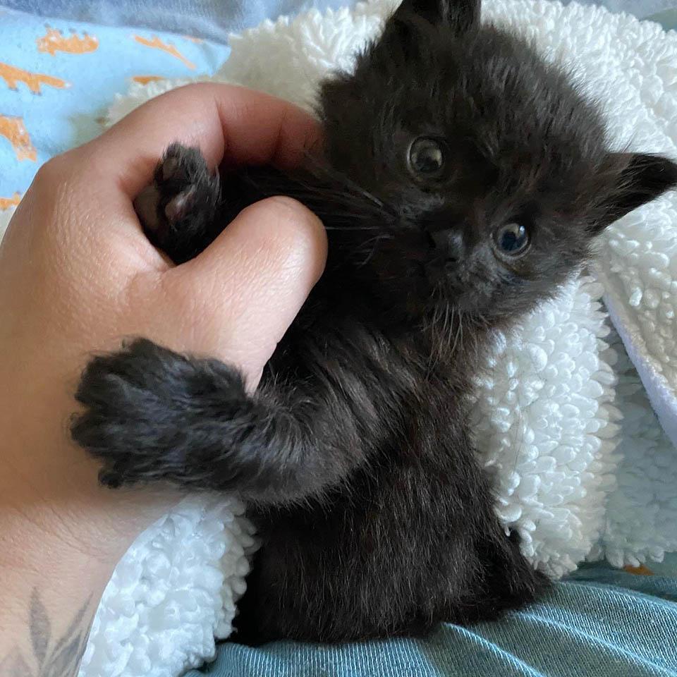 Gatito se acurruca