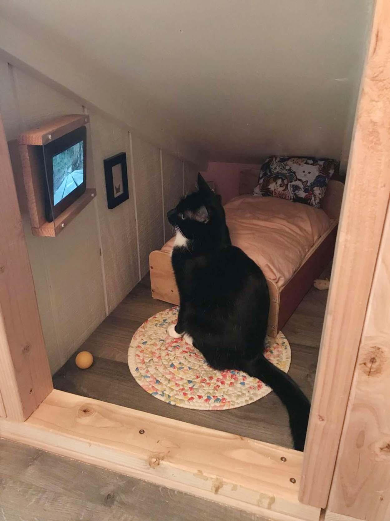 Gato disfruta ver videos en su propio cuarto