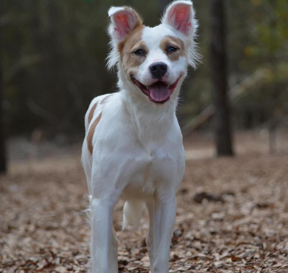 Hermosa perrita adoptada