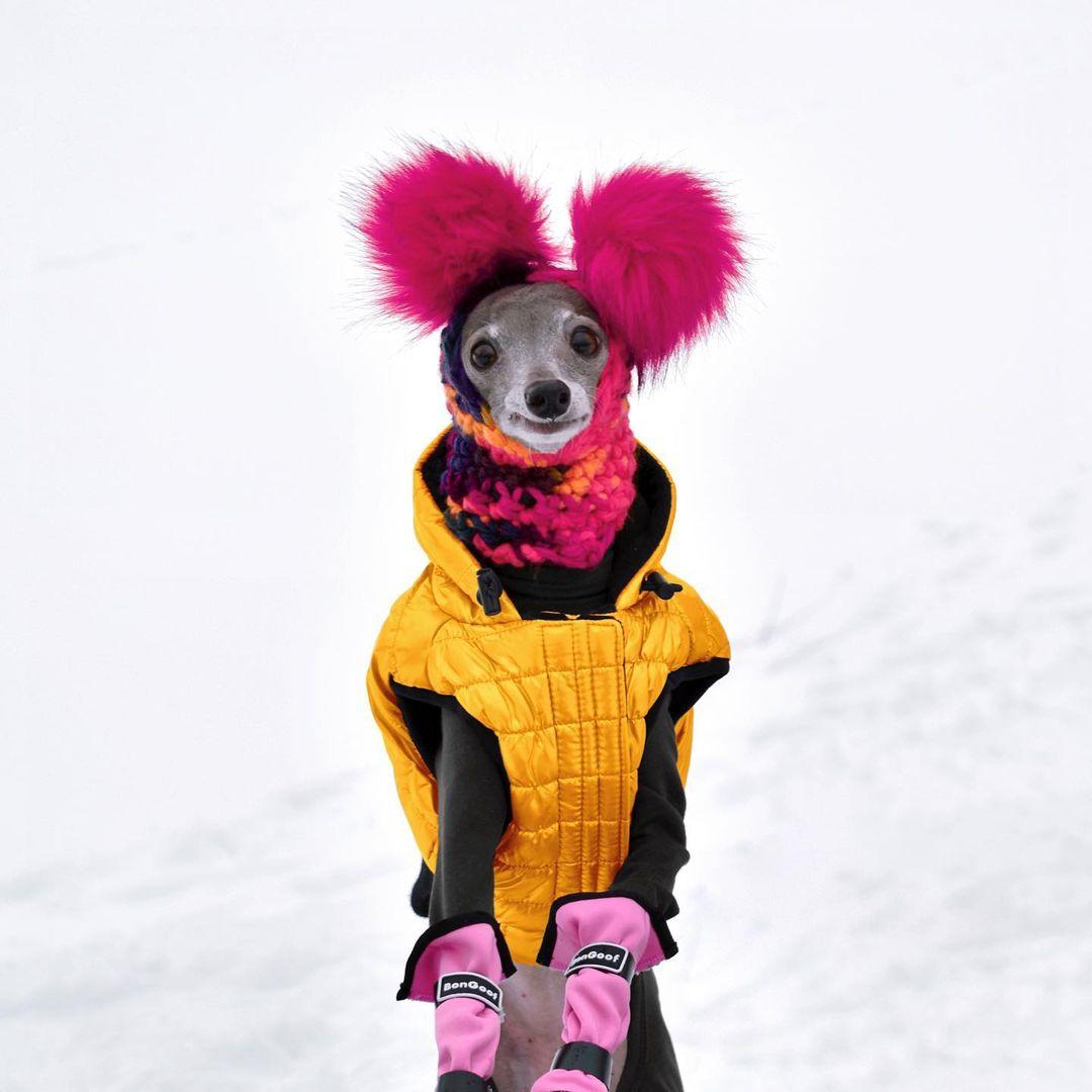 Hermoso perrito y su abrigo