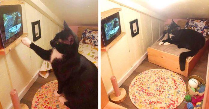 Hombre transforma el espacio detrás de la pared en un dormitorio para su gato