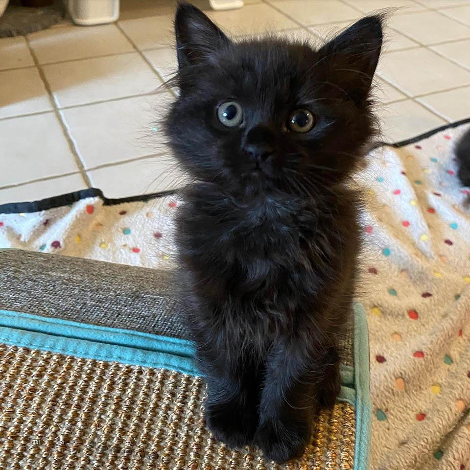 Lindo gatito se acurruca
