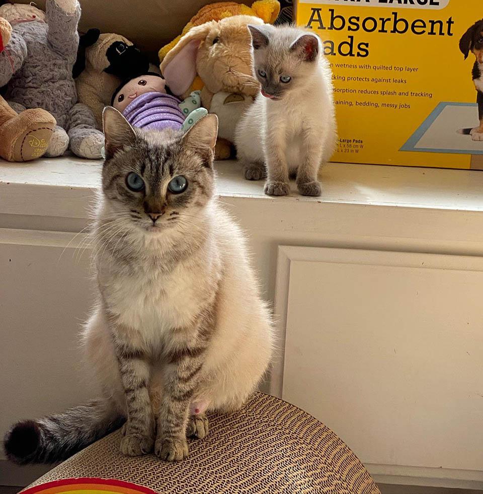 Madre adoptiva felina