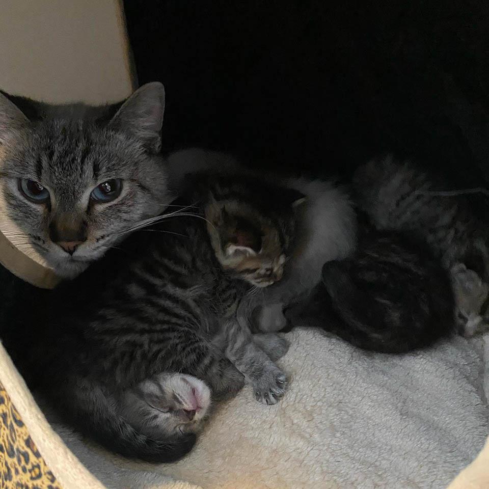 Mamá felina y gatitos