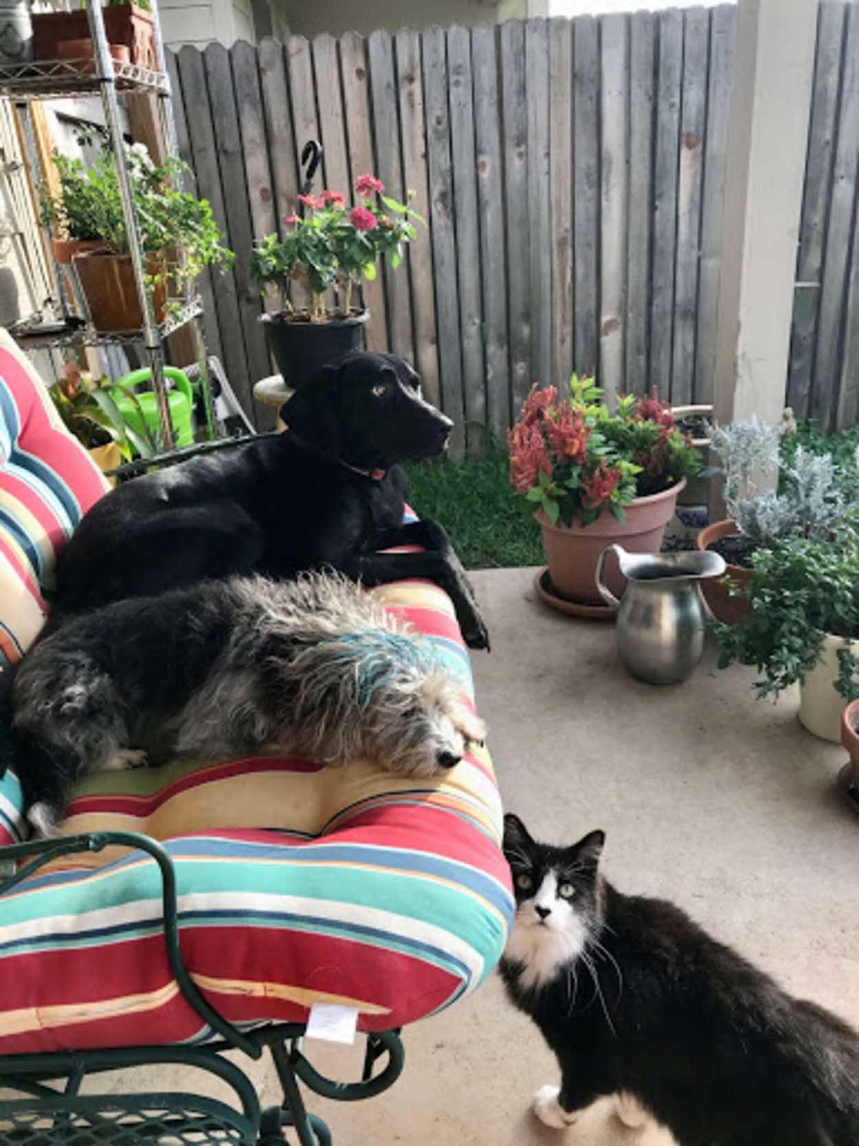 Mascotas descansando juntas