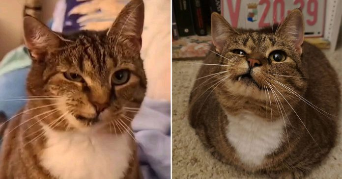 Mujer llega refugio encuentra gata con rostro asimétrico