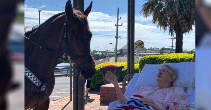 Mujer que ama a los caballos recibe la sorpresa más dulce