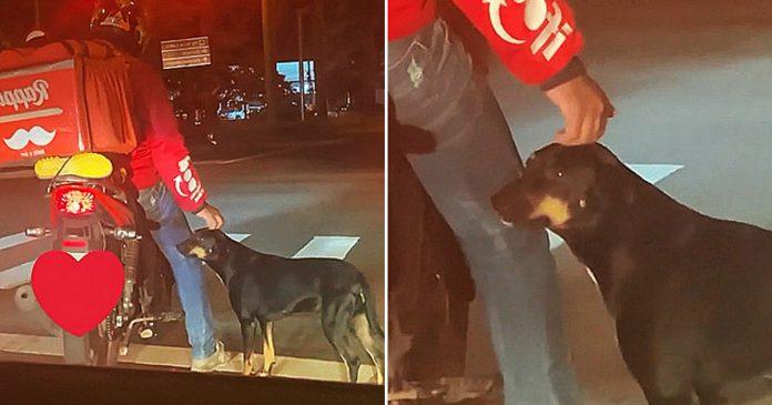 Perro aparentemente sin hogar pide cariño