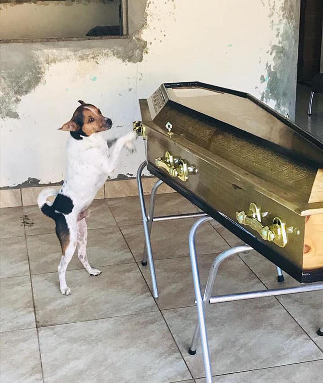 Perro llora a su dueña