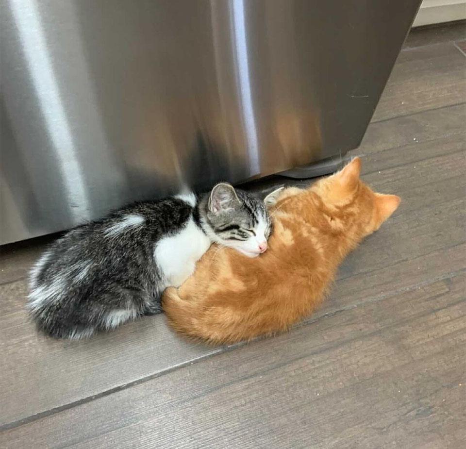 Tiny y Theodore durmiendo