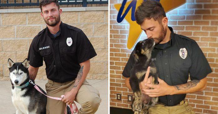 Trabajador apuesto refugio recibe más atención perros