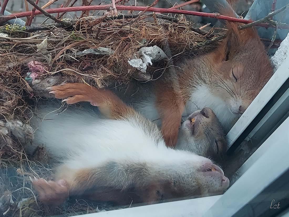 Chico ve ardillas adorables tomando siesta