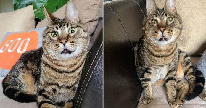 Este gato rescatado parece un conejito