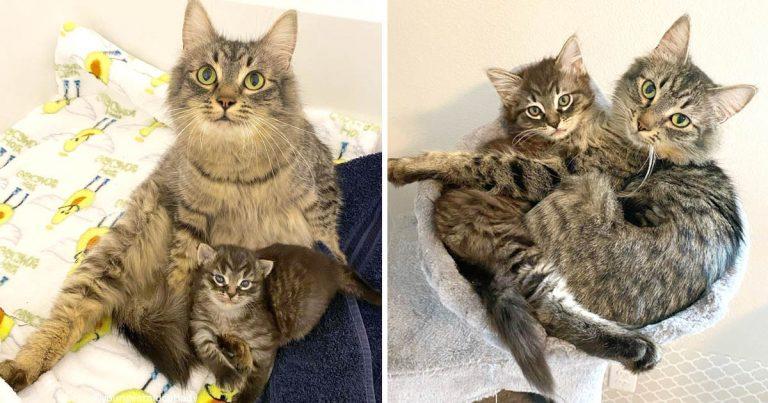 Gata y su único gatito han sido inseparables desde el primer día