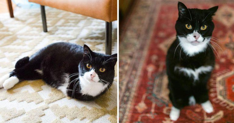 Gatito de dos patas inspira a las personas a adoptar mascotas con necesidades especiales