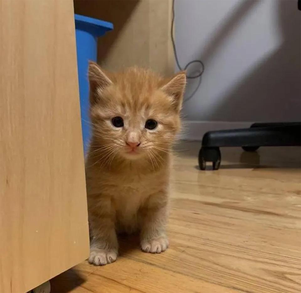 Gatito está feliz explorando