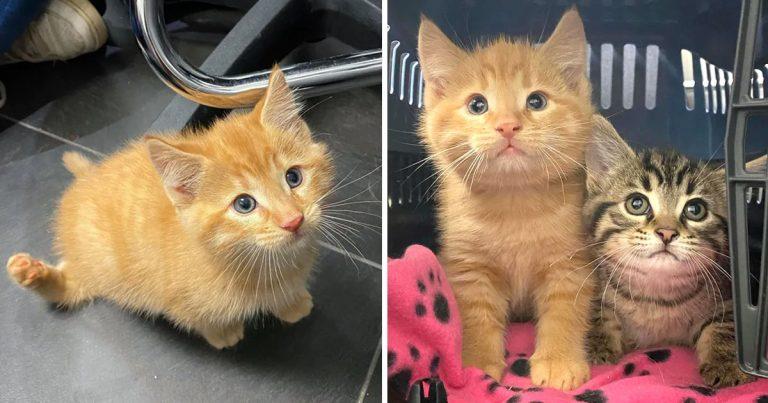 Gatito está tan feliz de caminar y correr sobre sus cuatro patas por primera vez