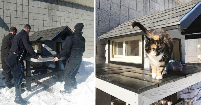 Gato seguía yendo al departamento de policía, así que le construyeron una casita acogedora