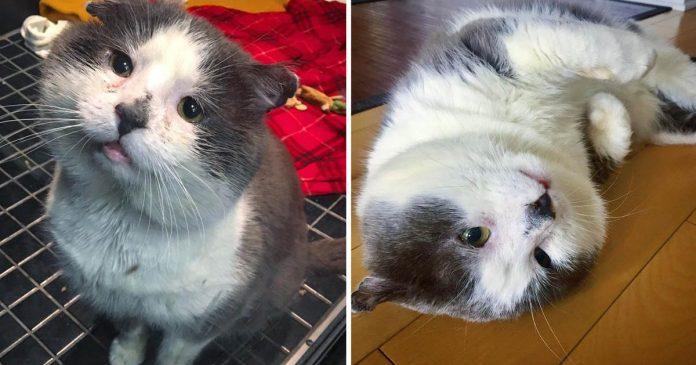 Gato vivió calles toda vida realidad sueño
