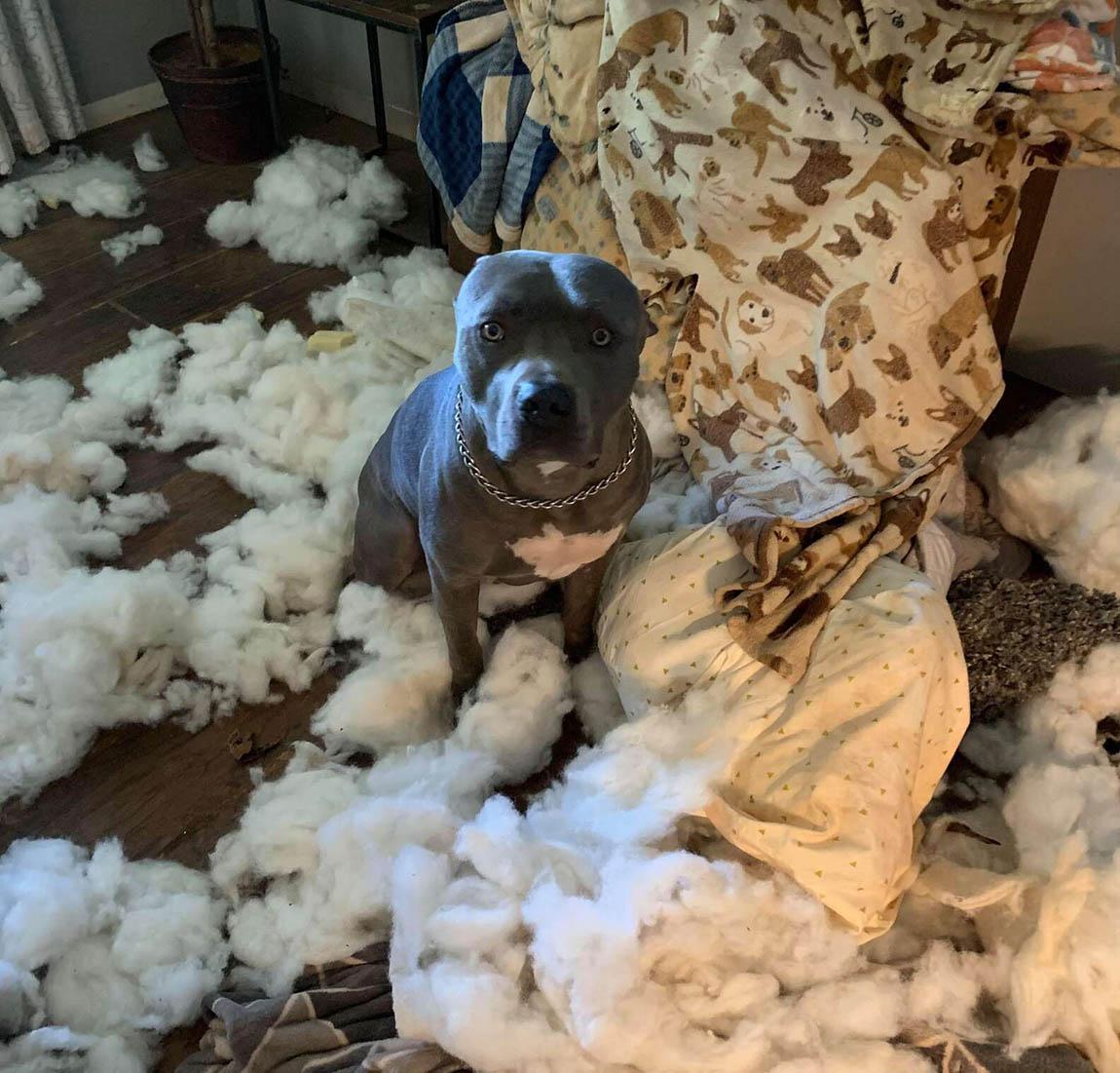 Mujer llega a casa para encontrar su sala cubierta del relleno del sofá