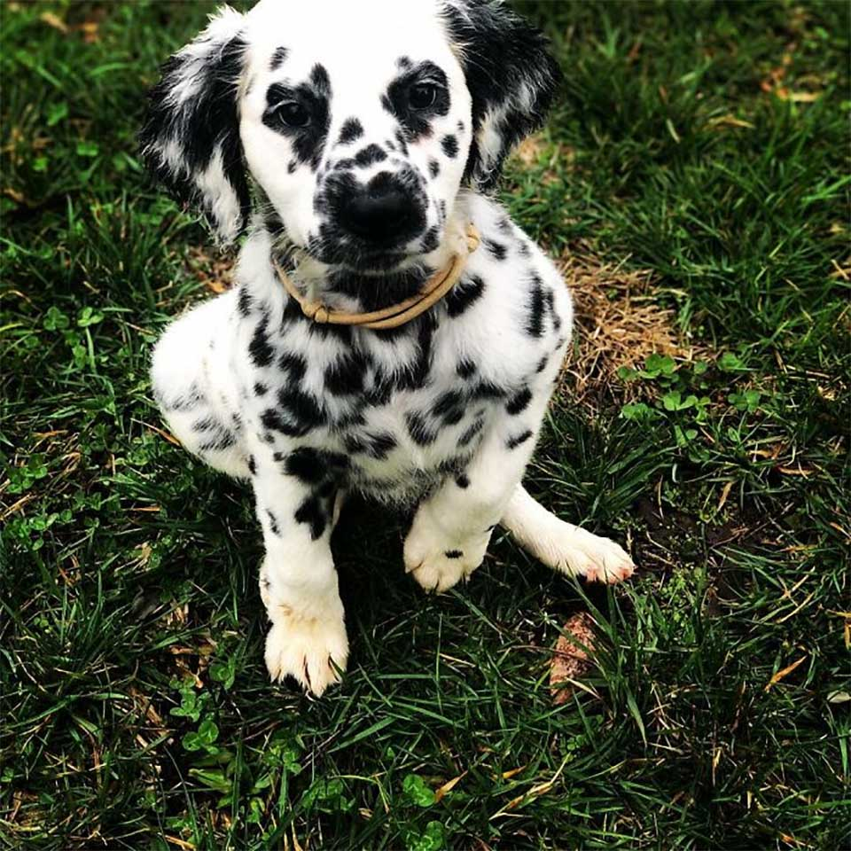 Oakley cachorro