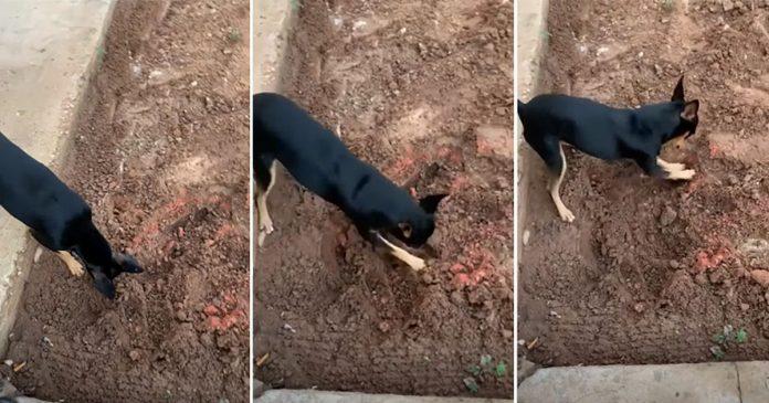 Perro de un traficante ayuda a la policía