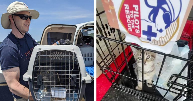 Piloto vuela con más de 50 gatos rescatados y los lleva a sus hogares para siempre