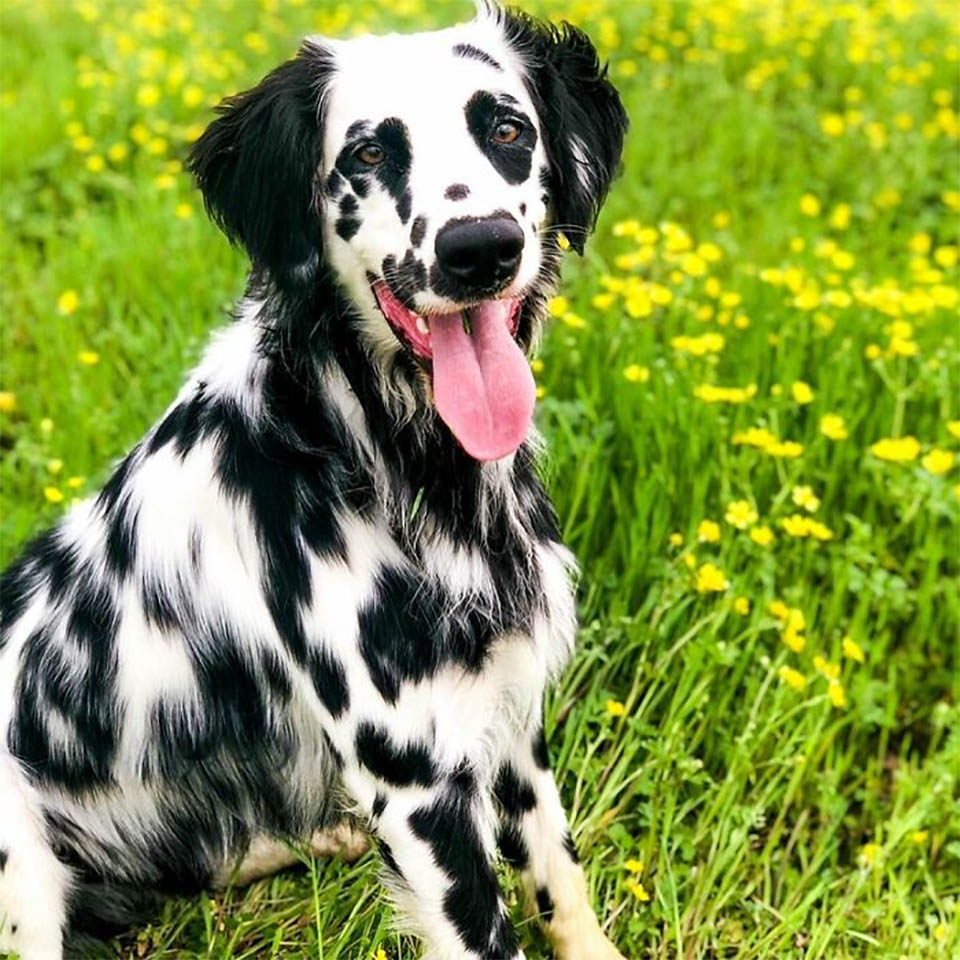 Este adorable perro Oakley