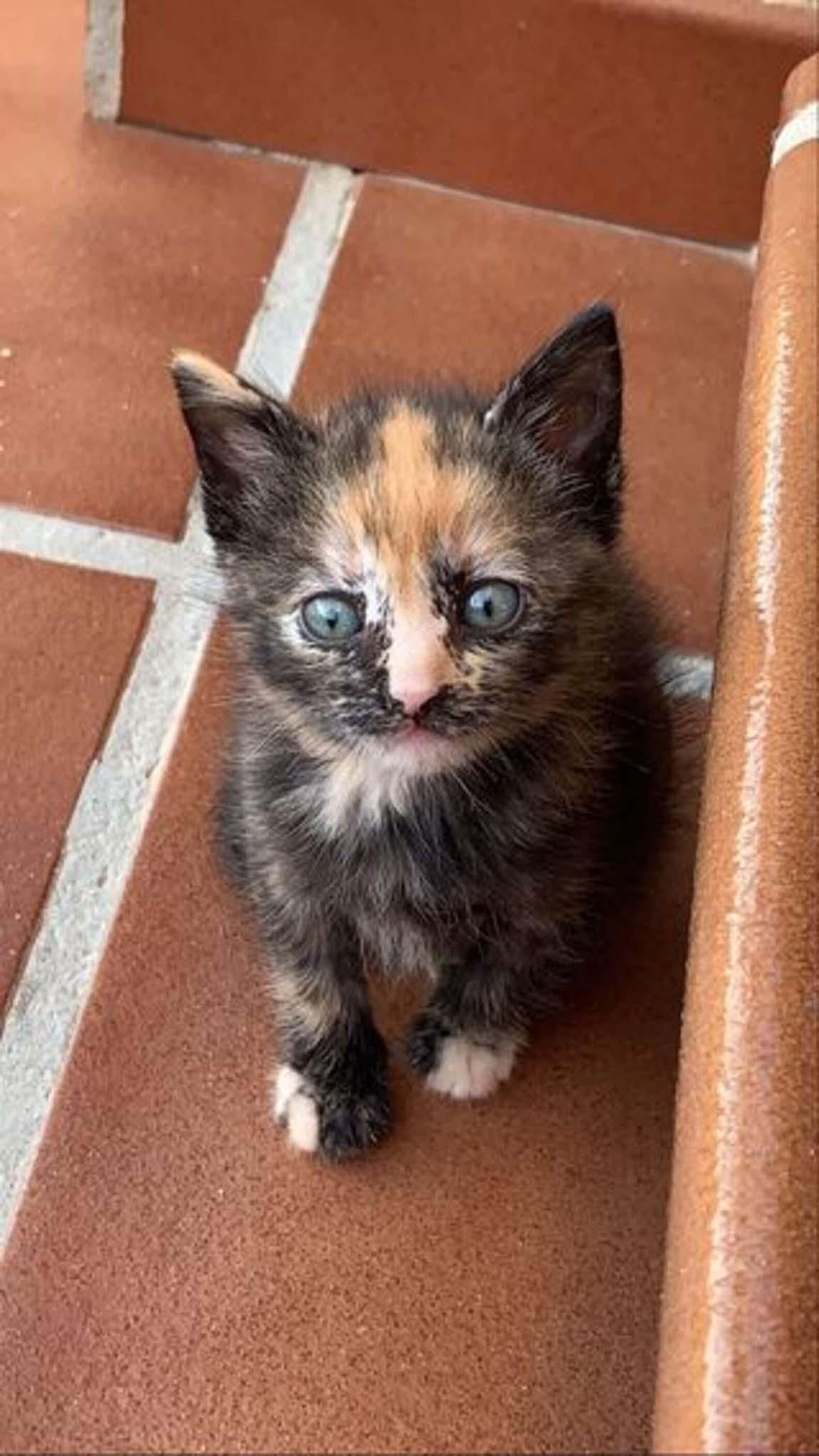 Adorable gatita bebé