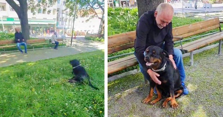 Dulce rottweiler consuela a un extraño en el parque que recientemente perdió a su perro