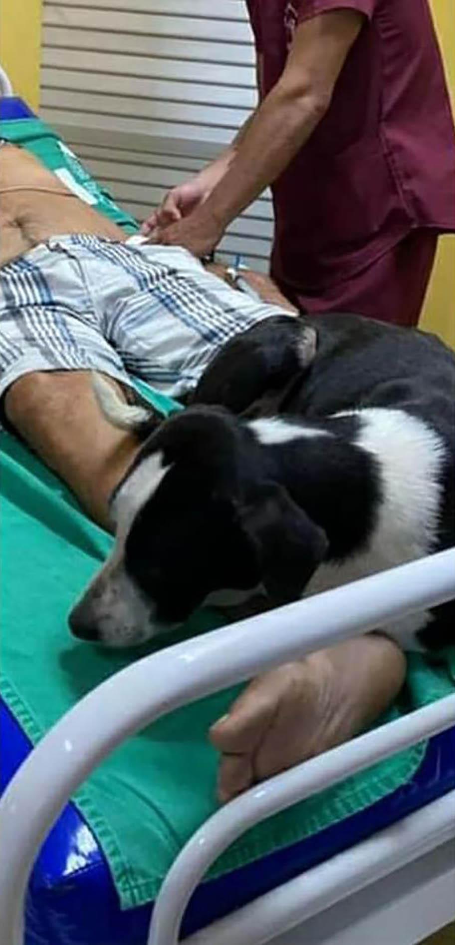 Este perro no se aleja de su padre fallecido