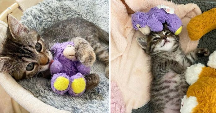 Gatita lleva cordero juguete donde va