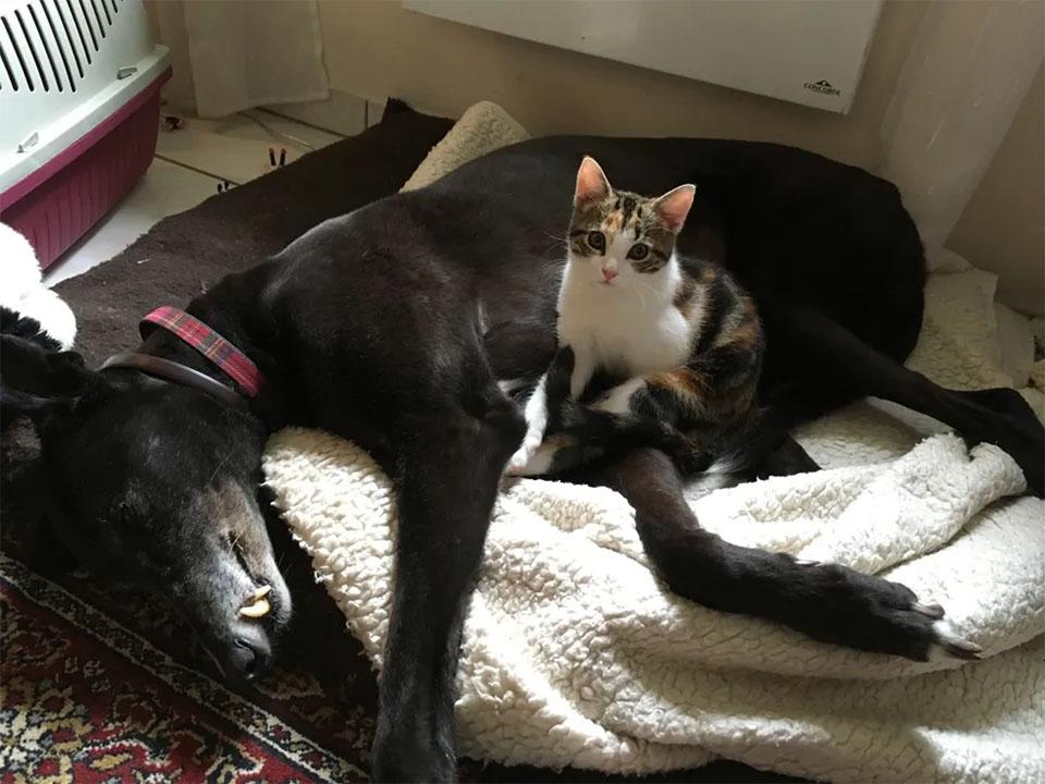 Gatita y hermano adoptivo