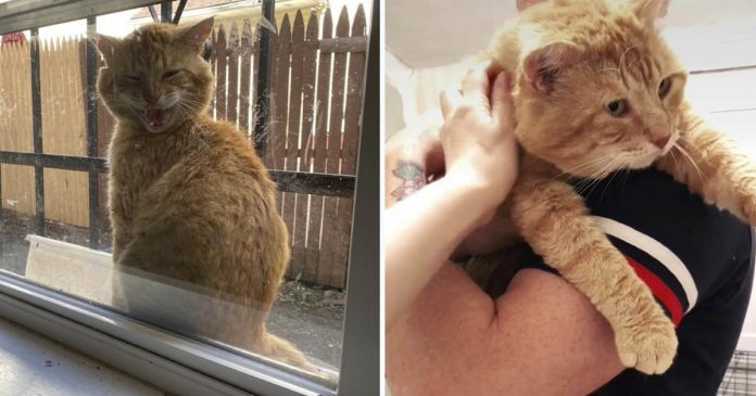 Gato que aparece en la ventana de esta familia está listo para dejar su vida en las calles