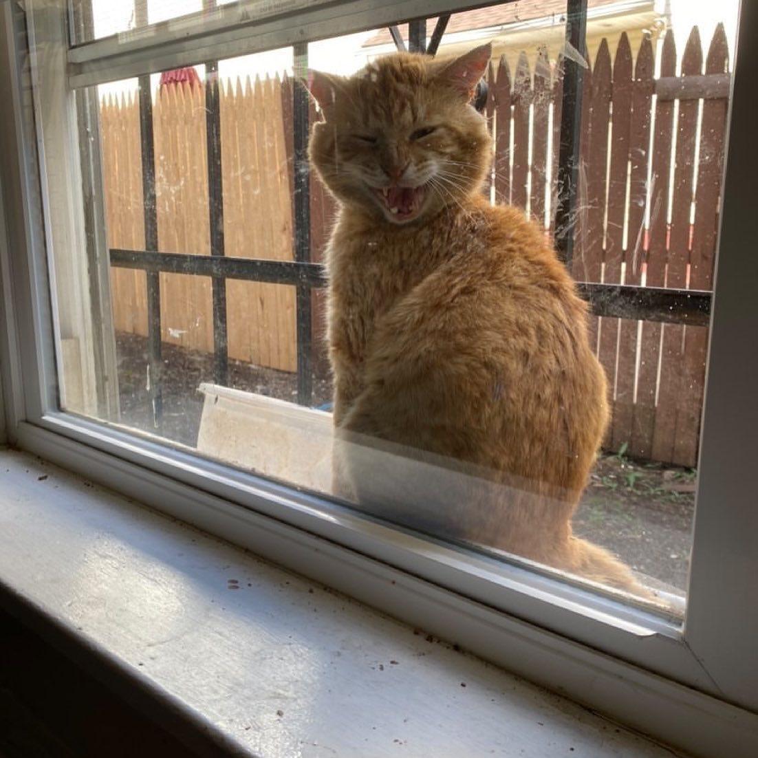 Gato que aparece en la ventana de esta familia