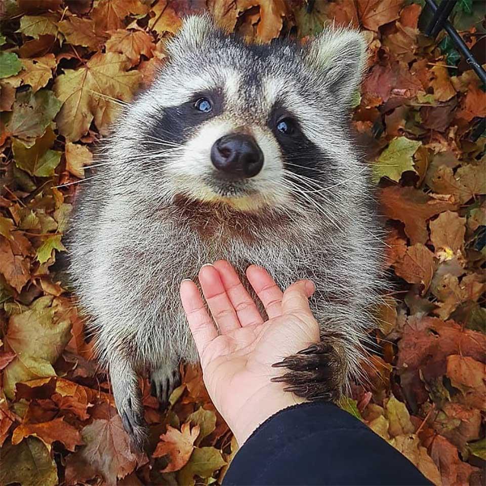 Little Hands visitando